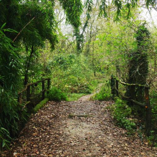Nel Parco della Sora, tra vegetazione e tracce di animali