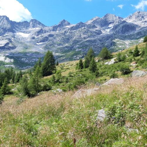 La Val dell'Oro, tra pinete e pascoli