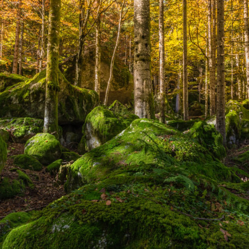 Nella magia di una foresta incantata